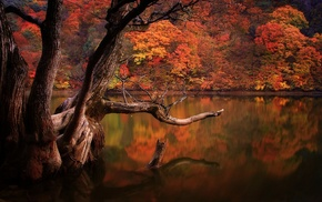 reflection, dead trees, South Korea, lake, forest, water