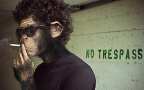 smoking, monkeys