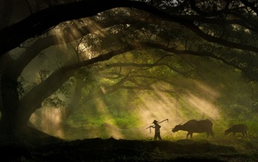 animals, photography, cows, Sony, silhouette, sun rays