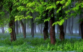 grass, nature, mist, forest, shrubs, landscape