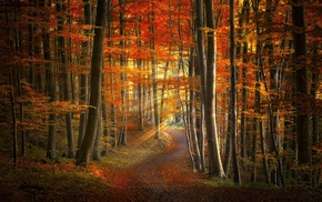 road, nature, fall, sunlight, trees, leaves