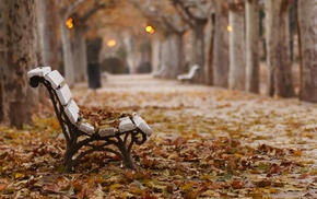 leaves, park, fall, bench