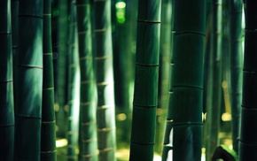 lights, bokeh, wood, bamboo, forest, gold
