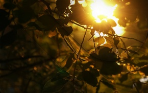 trees, nature, branch, leaves, sunlight