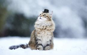 depth of field, animals, snow, hat, cat, nature