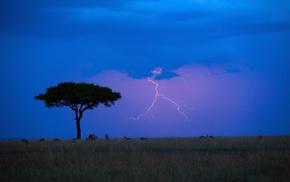 lightning, nature, antelope, animals, savannah