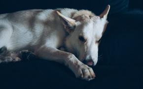 Andre Pilli, dog, animals