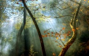 sun rays, nature, mist, sunrise, leaves, forest