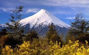 mountain, nature, white, wildflowers, yellow, Chile