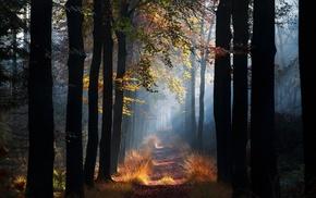 mist, morning, fall, landscape, trees, leaves