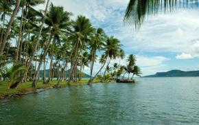 palm trees, coast, island
