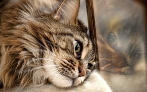 reflection, cat, animals