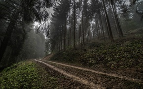 mist, forest, nature, hill, Germany, dark