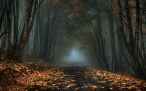 mist, fall, morning, trees, forest, nature