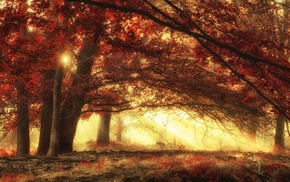 forest, nature, red, fall, magic, morning