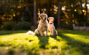 nature, bokeh, dog, trees, sunlight, forest