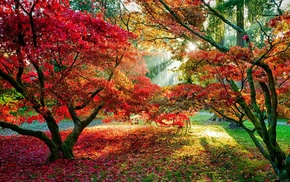 forest, trees, sun rays, fall, red leaves, leaves