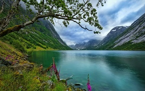 Norway, grass, landscape, nature, wildflowers, lake