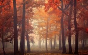 landscape, leaves, park, morning, sunrise, mist