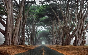 nature, landscape, trees, ancient, cypress, tunnel