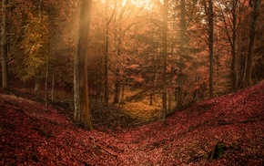 hill, leaves, fairy tale, colorful, sun rays, trees