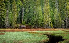 stream, forest clearing, cabin