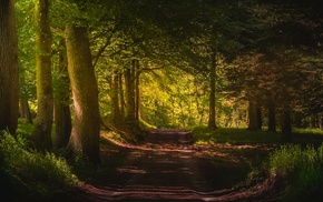 green, landscape, dirt road, trees, path, Denmark