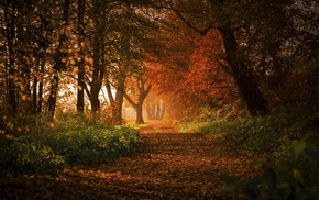 shrubs, nature, leaves, trees, morning, Germany