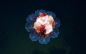 photography, jellyfish, nature, flowers