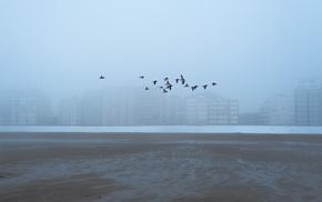 building, sea, photography, nature, landscape, birds