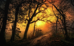 dirt road, trees, yellow, nature, sky, path
