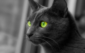monochrome, cat, animals, selective coloring, green eyes