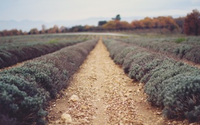 filter, farm, nature, photography, depth of field, plants