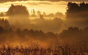 forest, sunlight, mist