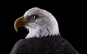 photography, animals, bald eagle, nature, birds, eagle