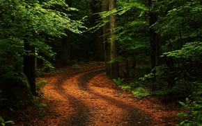 dirt road, branch, path, trees, nature, ferns