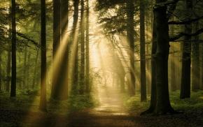 nature, mist, path, forest, landscape, trees