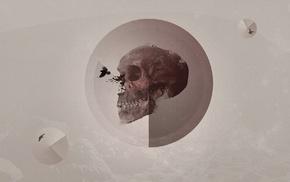 birds, circle, raven, skull, artwork, lines