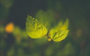 water drops, macro, branch, green, leaves, depth of field