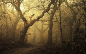 path, nature, landscape, mist, fall, forest