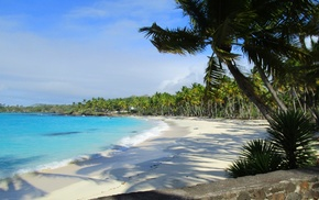sand, palm trees, tropical, morning, turquoise, water