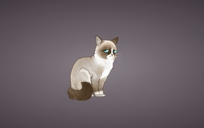 cat, minimalism, Grumpy Cat