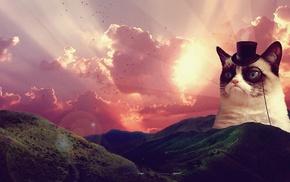 Grumpy Cat, clouds, animals, cat, landscape, hat
