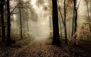 mist, path, morning, nature, dark, forest