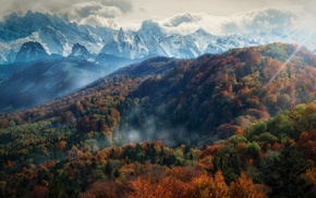 mountain, forest, mist, fall, sun rays, snowy peak