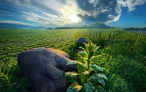 field, nature, rock, blue, sunset, clouds