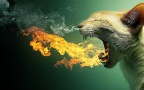 photo manipulation, animals, cat, smoke, fire