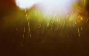 grass, macro, green, sun rays