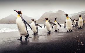 animals, penguins