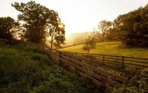 lens flare, landscape, nature, trees, sunset, plants